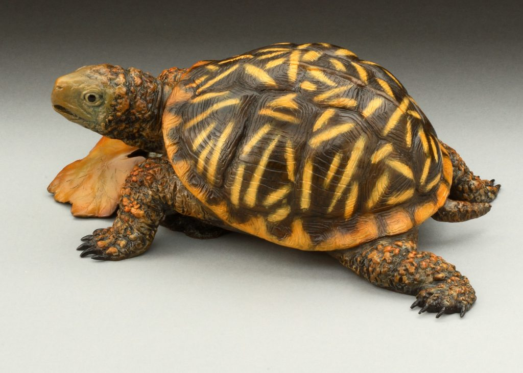 Ornate Box Turtle - Diane Mason